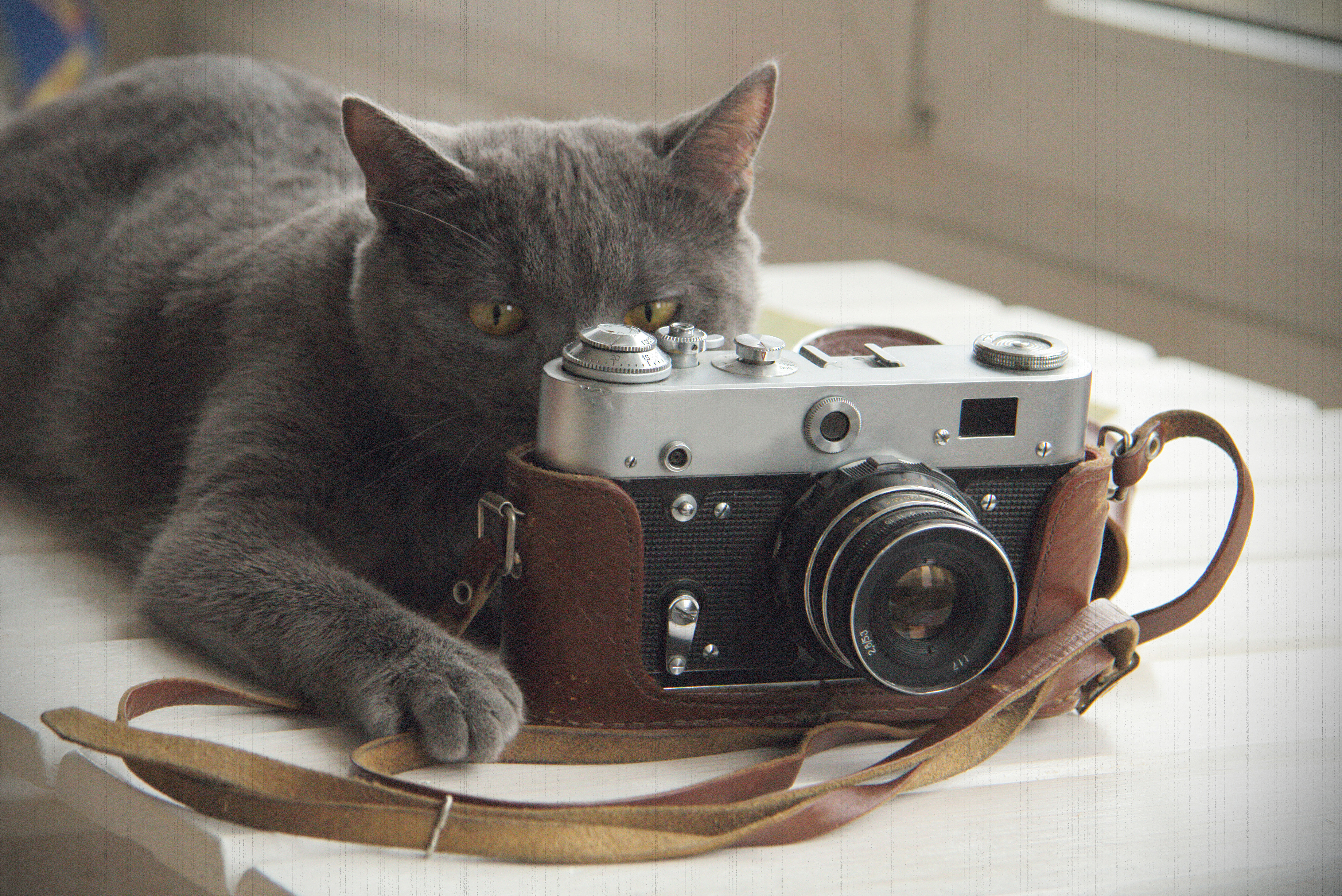 A cat in front of a camera, positioned as if to take a picture